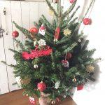 IKEAのもみの木。癒される、モミの木の香り。生のもみの木のクリスマスツリー